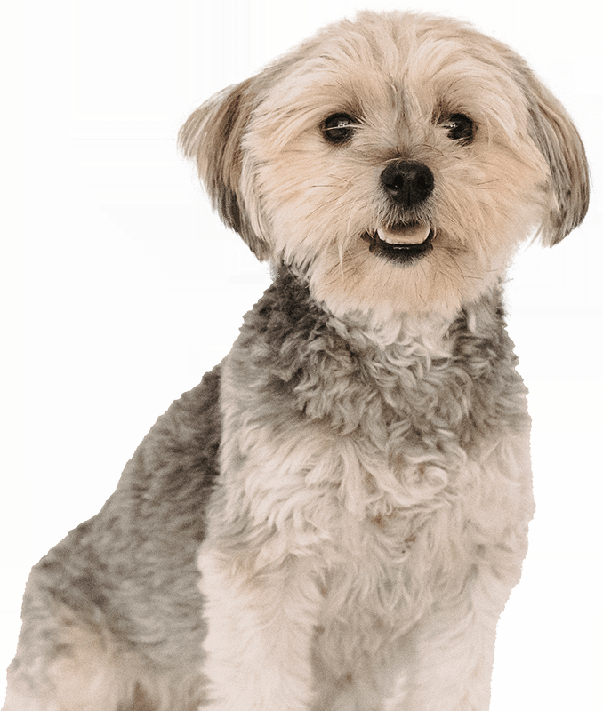 The Pedigree Club lets you register your dog for free and obtain pedigree dog certificates. We also offer 3 or 5 generation certificates.